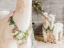 Simply-korsun-alena-portland-south-north-carolina-wedding-photographer_0014-1600x1198
